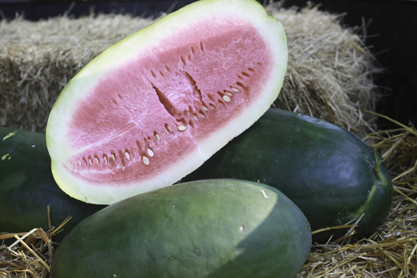 Buy A Genuine Bradford Watermelon
