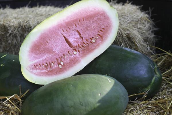 Buy A Genuine Bradford Watermelon