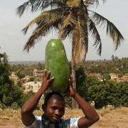 Watermelons in Tanzania!