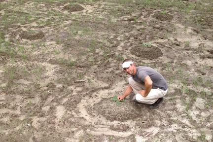 Planting Instructions