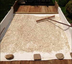 SeedsDrying_8_12_2014