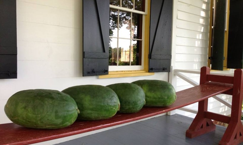Watermelons in the Shade