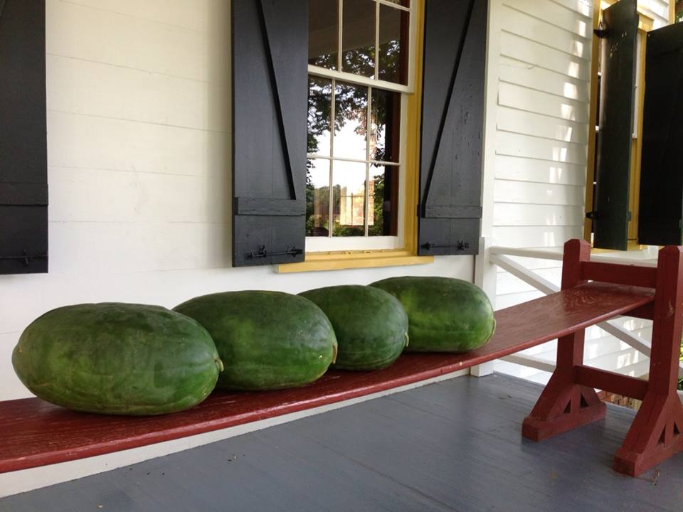 Watermelons_7_26_2014